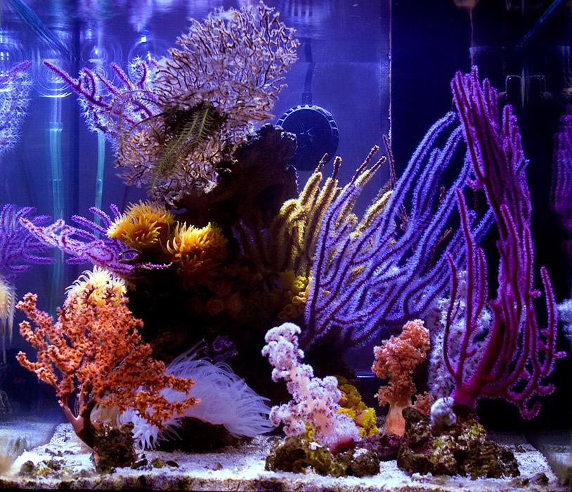 azoox-nano-reef-1.jpg