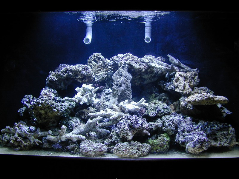 Observations On Dry Rock Aquascaping Reef Builders The Reef And Saltwater Aquarium Blog