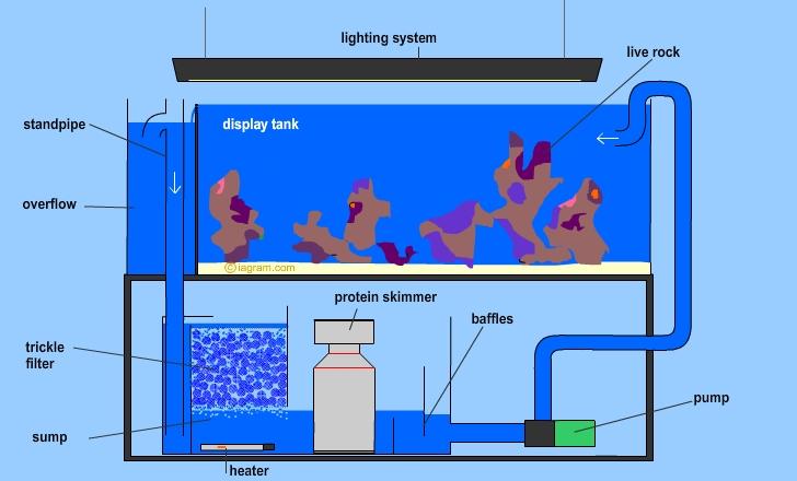 Diagram Of Fish Only With Live Rock Aquarium