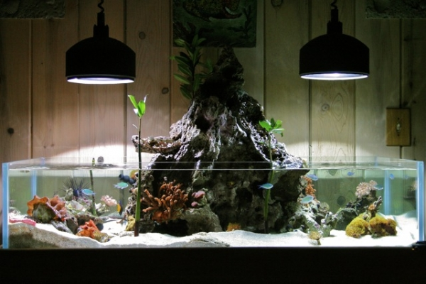 Aquascaping Outside The Box The Volcano Scape Of Kyle Verry Reef Builders The Reef And Saltwater Aquarium Blog
