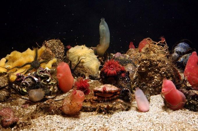 cold-water-reef-tank.jpg