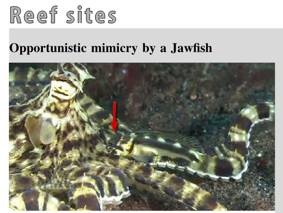 A glimpse of the new article published in the journal Coral Reef.