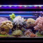 Full reef tank