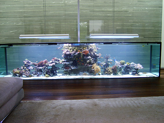 Full tank shot, home aquarium