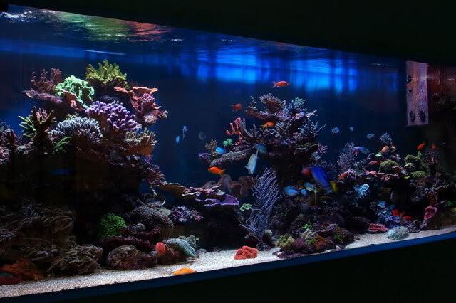 Borust Asjan Reef Tank in Slovania :: Reefbuilders.com