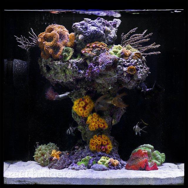 Johnny-Ciotti-upside-down-reef.jpg