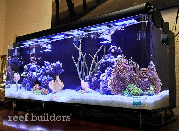 Desktop Nuvo 24 Gallon Sports A High Ratio Of Filtration To