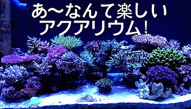 Tag Aquascape Reef Builders The Reef And Saltwater Aquarium Blog
