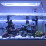 fts_aug_24_1024