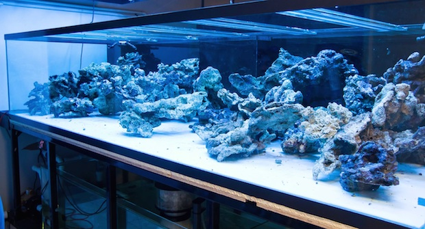 A Masterpiece Is Born Time Lapse Aquascaping Of Worldwide Corals New Show Tank Reef Builders The Reef And Saltwater Aquarium Blog