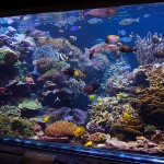 long island aquarium big reef left side-1