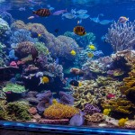 long island aquarium big reef left side-3