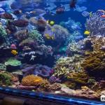 long island aquarium big reef left side-4