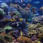 long island aquarium big reef left side-5
