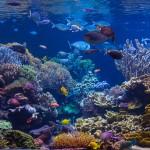 long island aquarium big reef left side-7