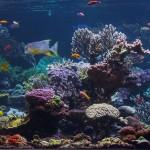 long island aquarium big reef right side-1
