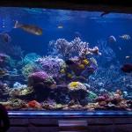 long island aquarium big reef right side-2