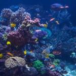 long island aquarium big reef right side-3