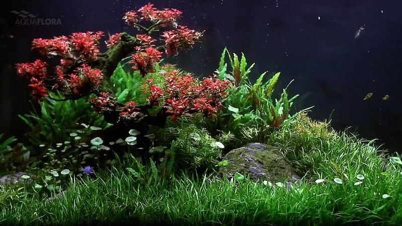 Redbonsai Treescape Is The Latest Masterpiece From Filipe Oliveira Reef Builders The Reef And Saltwater Aquarium Blog