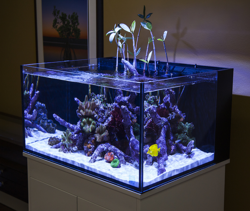 Transfer Your Freshwater Skills And Setup Your First Saltwater Aquarium Reef Builders The Reef And Saltwater Aquarium Blog