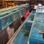aquatic warehouse-5