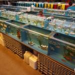 aquatic warehouse-6