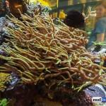 encinitas tropical fish-1