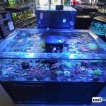 encinitas tropical fish-2