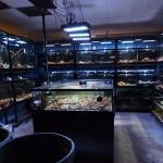 encinitas tropical fish-3