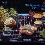 encinitas tropical fish-4