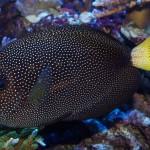 shipwreck cove corals-1