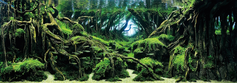 Top 7 Winners Of The World S Greatest Aquascaping Competition Reef Builders The Reef And Saltwater Aquarium Blog