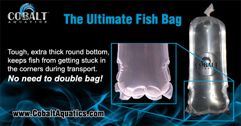 cobalt ultimate fish bag