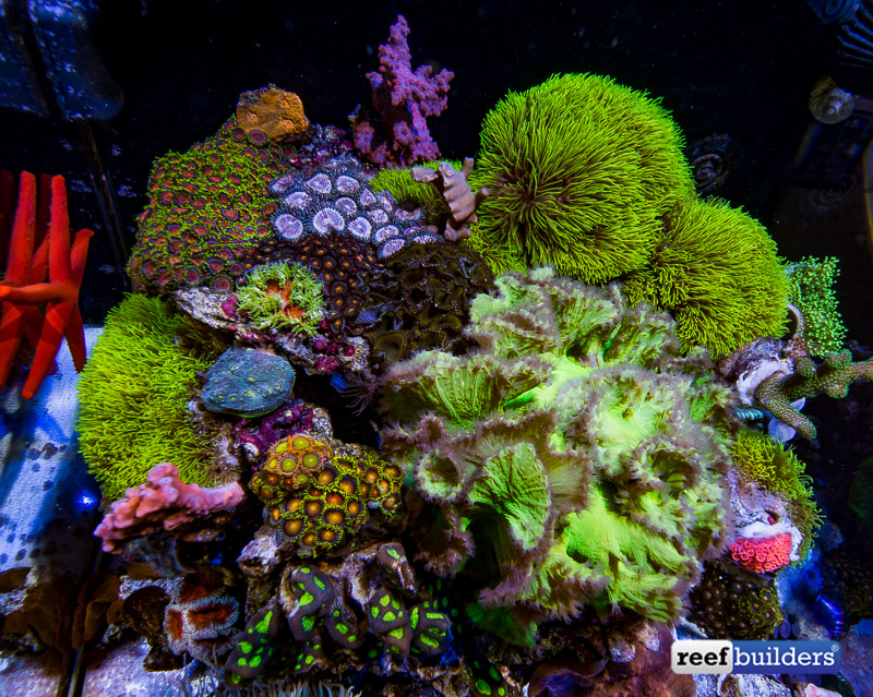 aquamedic-cubicus-reef-tank-9