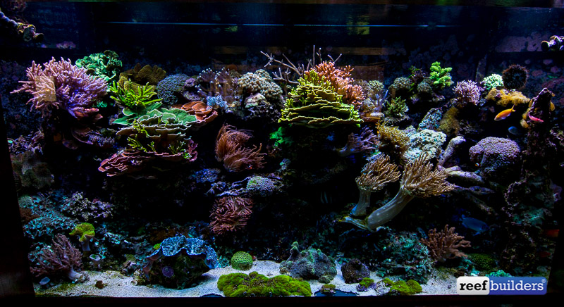 mountain-view-reef-tank-2
