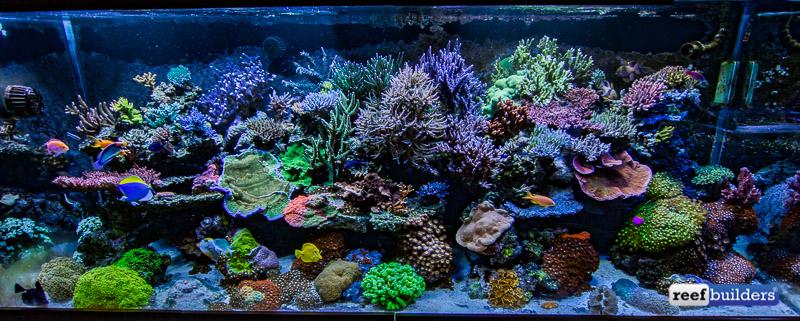 aquatic-art-inc-reef-tank-1