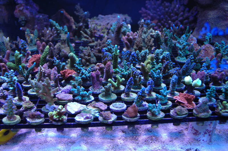 A selection of frags from that tank and more