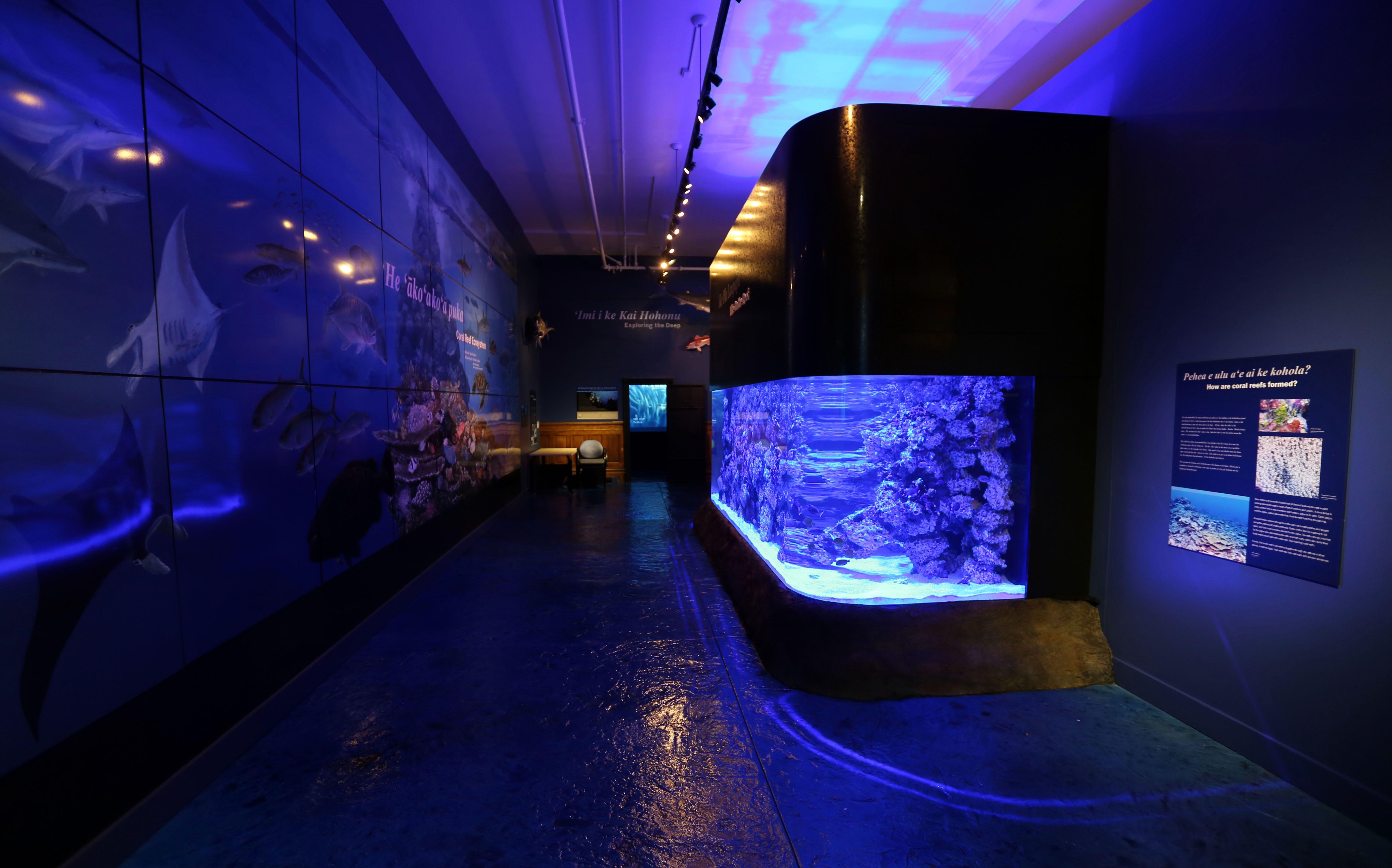Aquarium_MDC