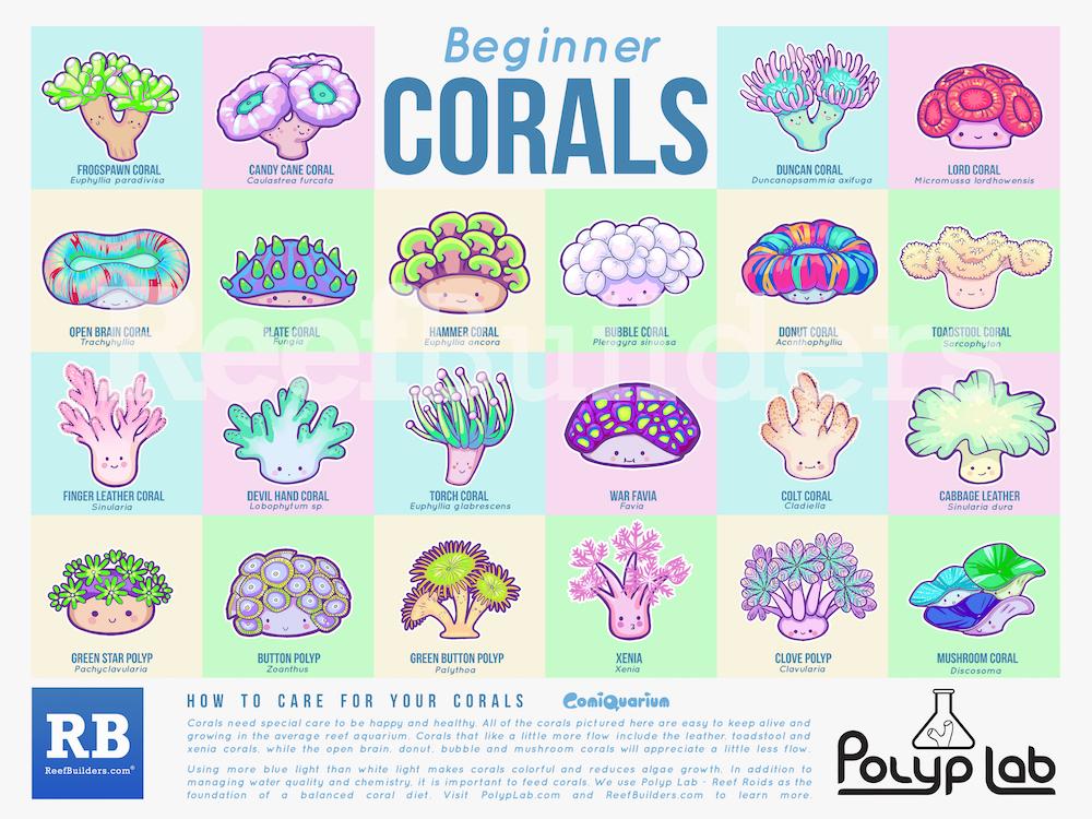 Corals-Poster-ReefBuilders