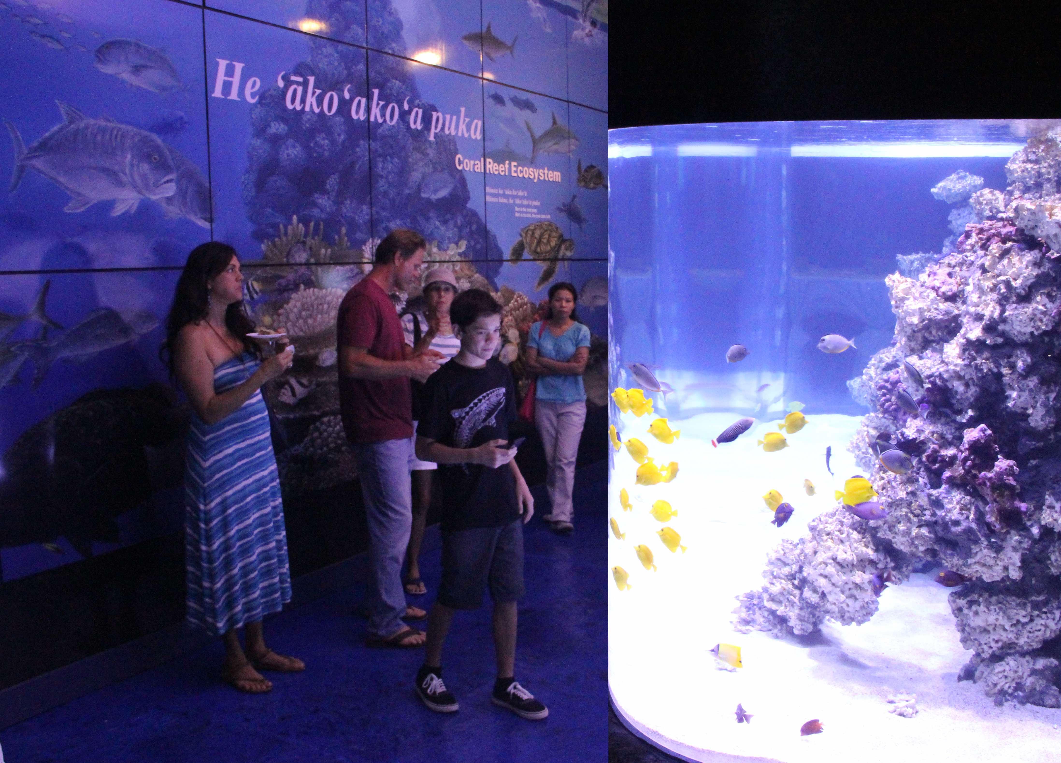 MDC aquarium