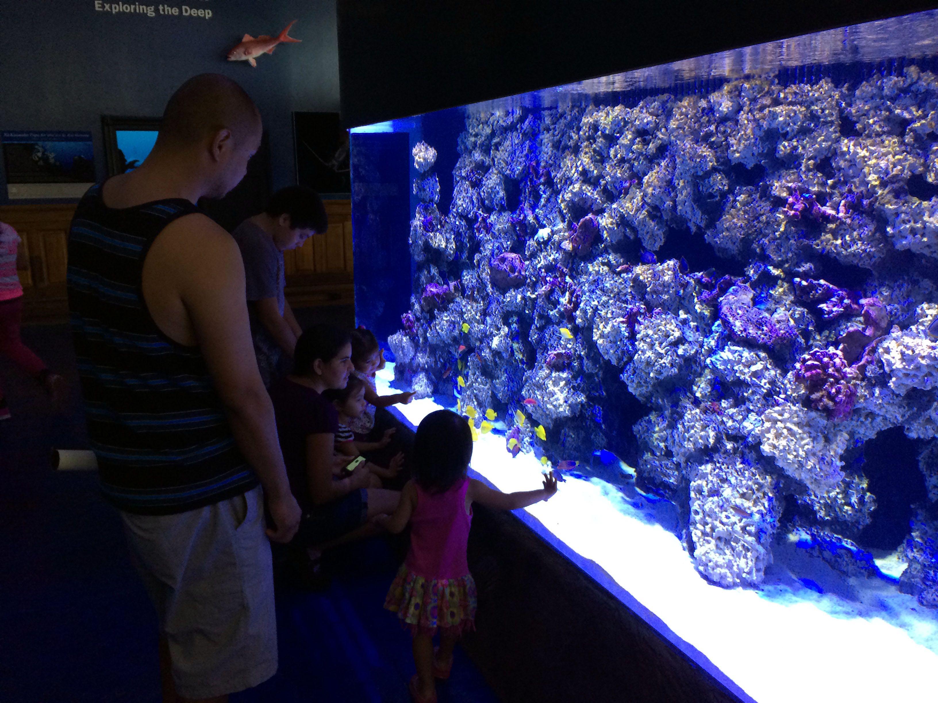 Mokupapapa aquarium exhibit