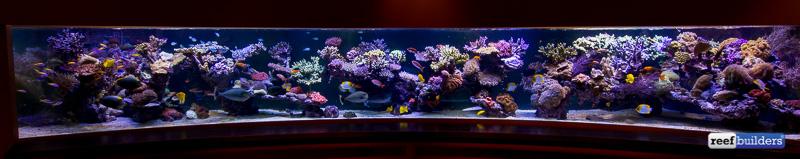 6-meter-pieter-reef-2