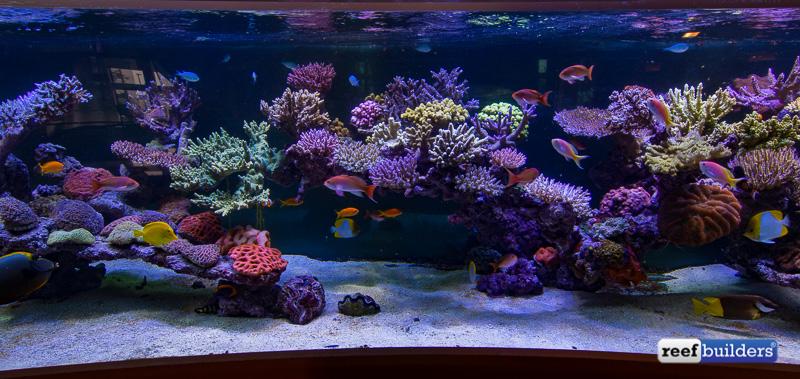 6-meter-pieter-reef-3