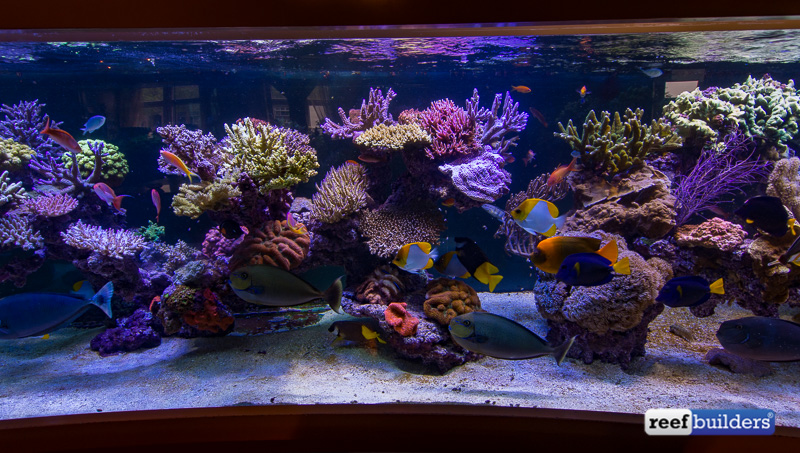 6-meter-pieter-reef-4