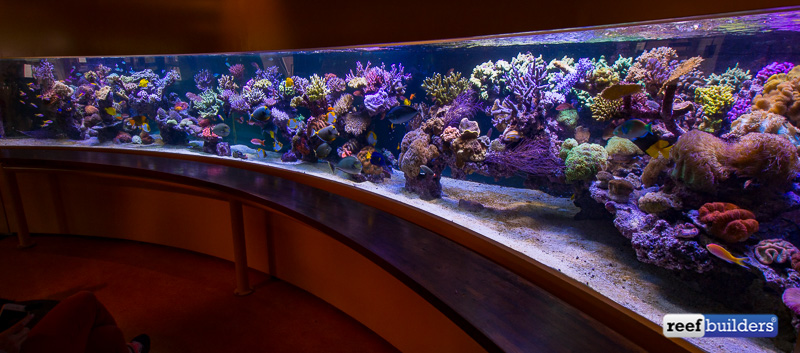 6-meter-pieter-reef-5