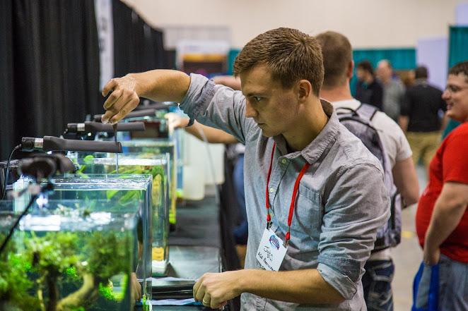 aquatic-experience-aquascaping