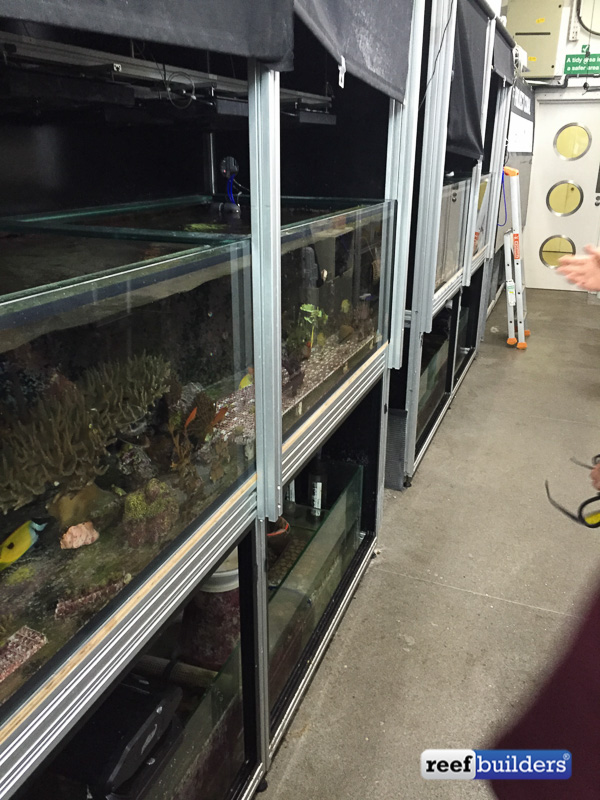 The tanks showing their blackout tarps that prevent any light other than what they want from hitting the corals