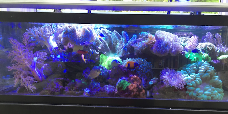 Even a simple tank of soft corals with minimal plumbing can provide headaches if care is not taken to minimize leaks or spills from it onto the carpet around it.