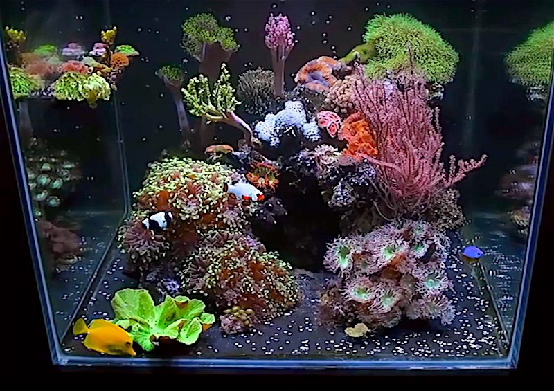 brothers-reef-tank