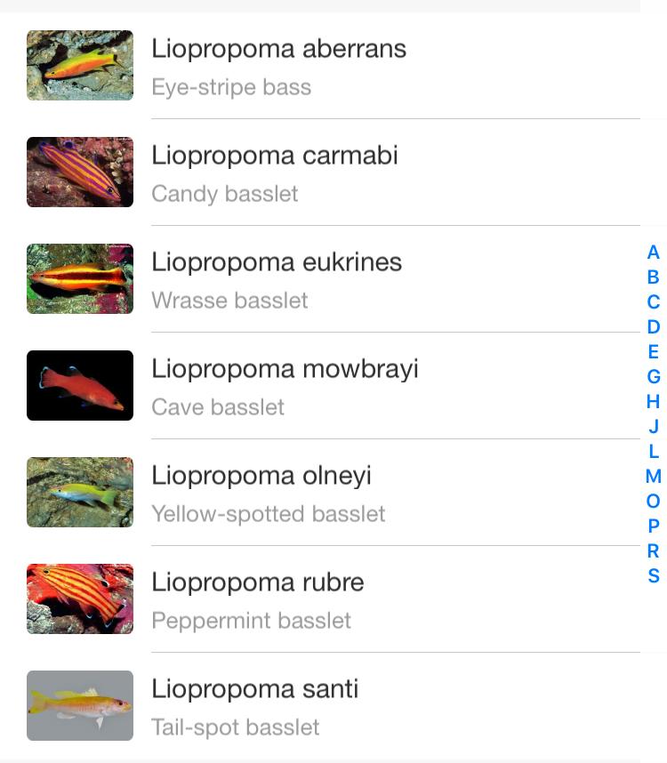 liopropoma-caribbean